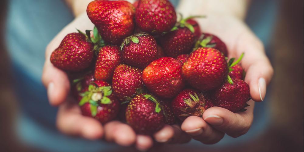 Fruit Bearing